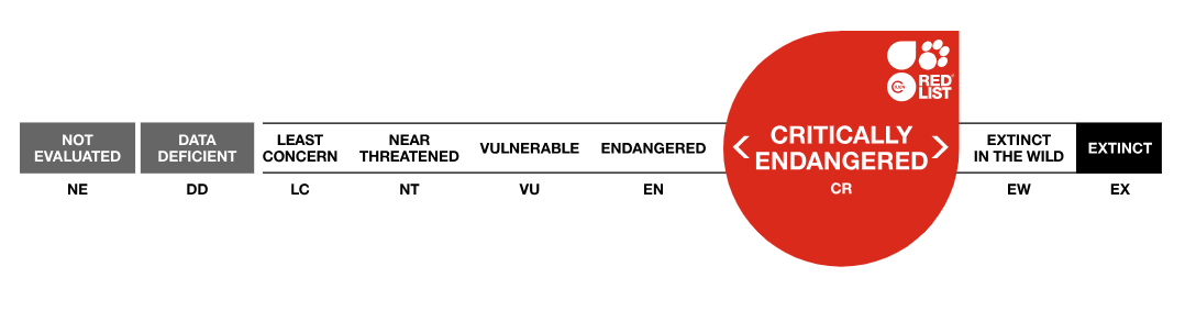 The IUCN Red List Categories.